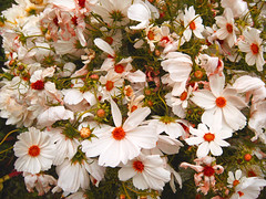 fiori di chini&jean