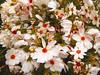 fiori-di-chini&jean