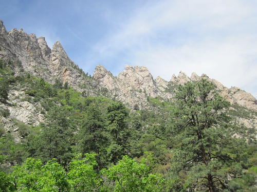 The Forested Organ Mountains