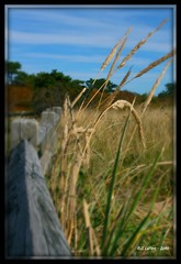 Along the Shoreline (bill.lepere) Tags: autumn grass capecod dunes shoreline woodfence novaphoto blepere
