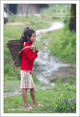 Girl coming back from work (Arif Siddiqui) Tags: costumes people india beauty festival kids portraits asia traditional tribal tribes local ethnic northeast arif arunachal attire siddiqui itanagar