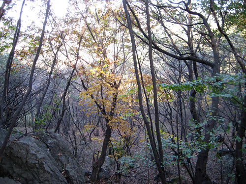 Fall hiking in Cheonan