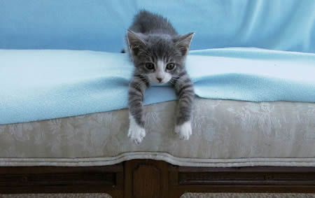 Kitten on Couch