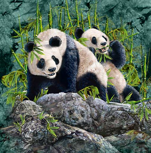 hidden-pandas-illusion