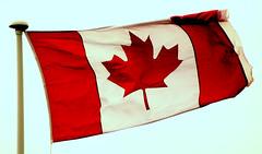 HAPPY BIRTHDAY CANADA - PENBLWYDD HAPUS CANADA (brynmeillion - JAN) Tags: wales searchthebest flag cymru aberystwyth canadaday ceredigion