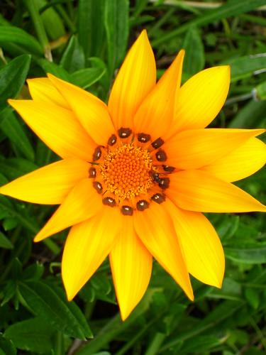 fiori piha (8)