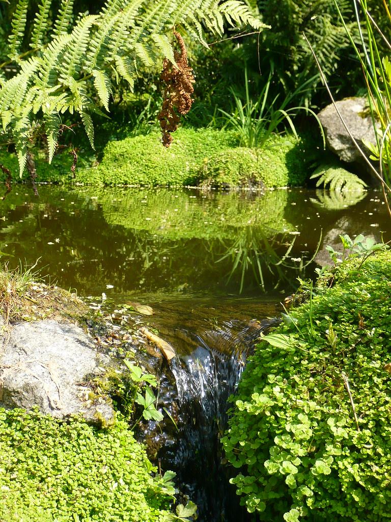 mousse jardin japonais finest le parc oriental de maulvrier le plus grand jardin japonais. Black Bedroom Furniture Sets. Home Design Ideas