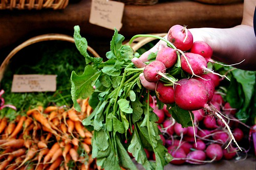 Huge radishes!