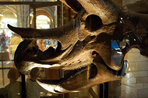 Ian_Boys님이 촬영한 Natural History Museum, London.