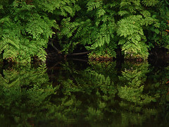 Lush ferns (Hodgey) Tags: green reflections river lush ferns anawesomeshot
