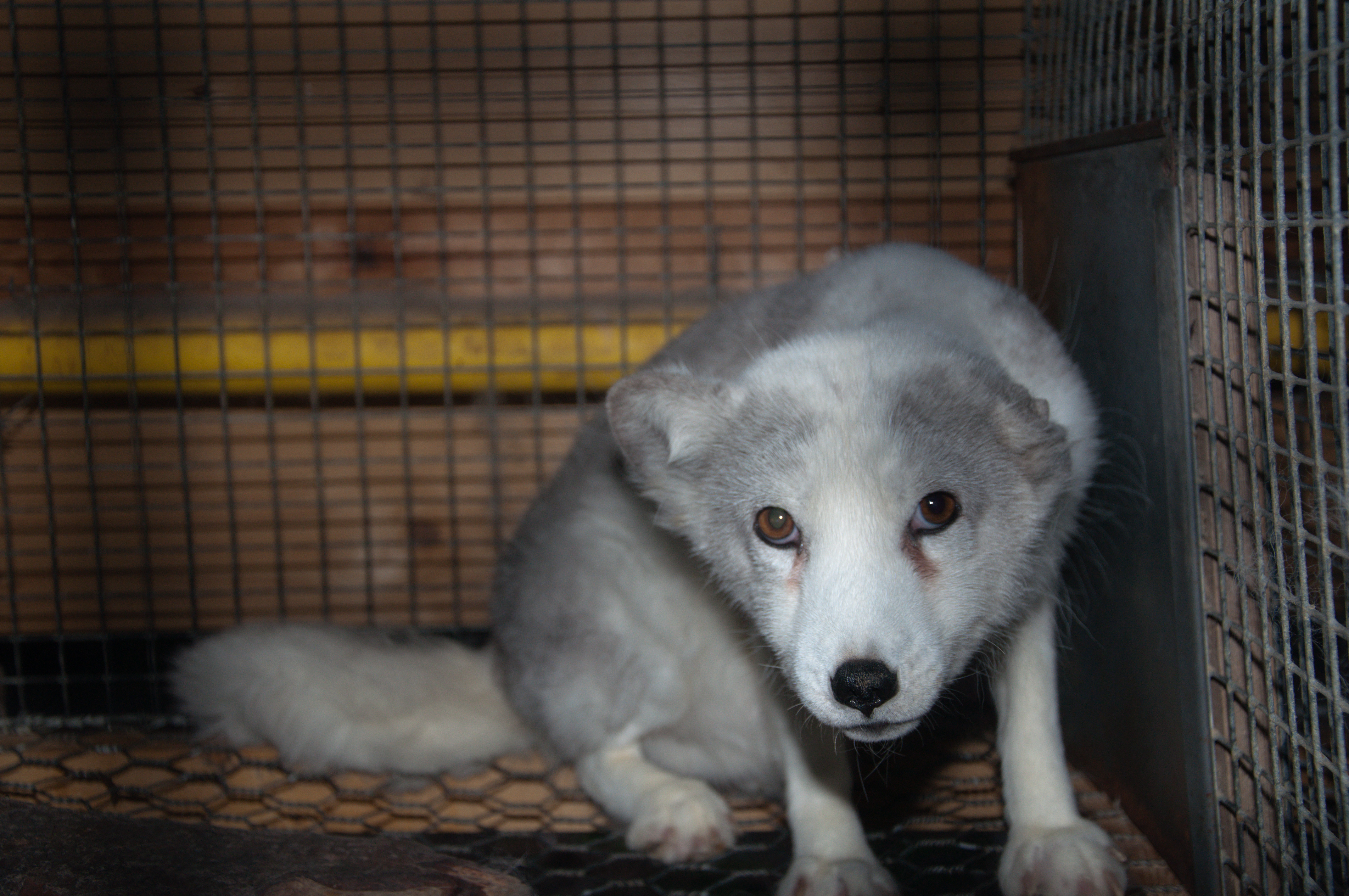 Foto: Nettverk for dyrs frihet & Dyrebeskyttelsen Norge