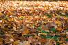 (Per Erik Sviland) Tags: autumn leaves nikon erik per d300 pererik sviland sqbbe pereriksviland