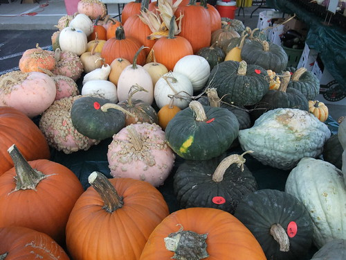 Pumpkins of All Colors, Shapes and Sizes
