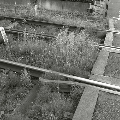 weeds by rails