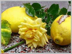 Stillleben lemon - still life lemon