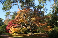 Autumn Beauty in Westonbirt (Heaven`s Gate (John)) Tags: autumn trees red england tree green fall nature beauty leaves yellow gardens botanical october forestry arboretum gloucestershire westonbirt commission glade aver 10faves johndalkin heavensgatejohn autumnbeauty nationalarbouretum