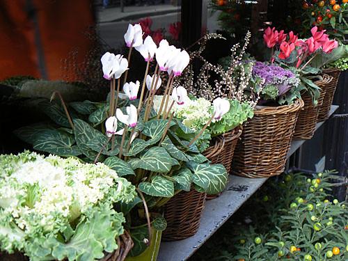 fleurs rue des saints pères.jpg