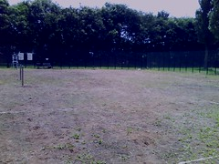 草むしり後。