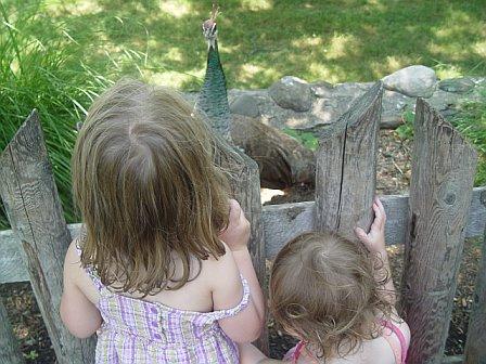 Three critters communing
