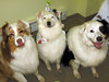 Jackson, Stella & Charlie