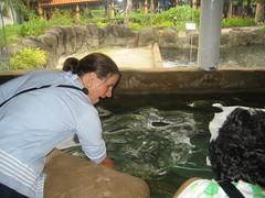 Ray Petting (Paddy O) Tags: singapore sentosa underwaterworld 2007