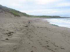 IMG_5712 (Brian Sadler) Tags: ireland holiday curracloe