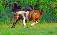 Yippy Ki Yi Yo! (Woolmarket100) Tags: horse mississippi farm pony fav15 equine loh woolmarket fav5 nikond200 views500 nikon18200mm views200 views600 views400 views300 views25 views76100 views5075 views101200 jalalspagesanimalkingdom
