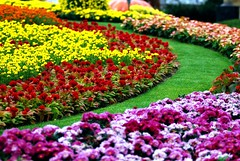 Everland four seasons garden (floridapfe) Tags: flower color garden others korea everland flowergarden fourseasonsgarden everlandthemepark
