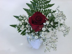 Rose 5 (deborahsimpson) Tags: various settings