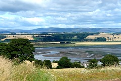 Montrose Basin- Laurencekirk