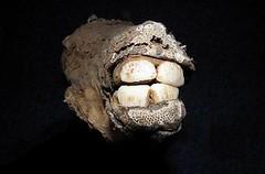 LLAMA skull (Lama glama glama) cráneo de LLAMA ......... Original = (3891 x 2556)