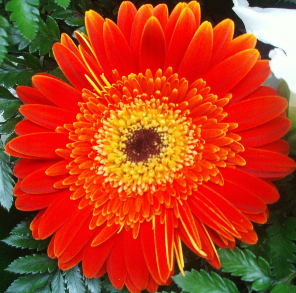 Ofrenda Pilar 2007