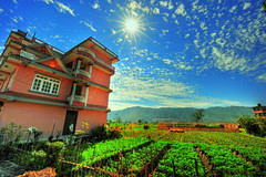 Living off the Land (MikeBehnken) Tags: travel nepal sun tourism asia rice farm farming bluesky farms kathmandu crops sunrays sunnyday kathmanduvalley sunstar himilayas travelphotography niceday sunstars colorphotoaward nikond700 nepalvalley
