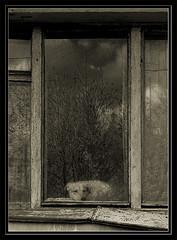 Home Alone | Один дома