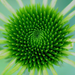 Like a circle in a spiral, a wheel within a wheel.... (cattycamehome) Tags: flower macro green nature tag3 taggedout circle spiral petals lyrics bravo tag2 tag1 song circles patterns centre stamens rings coneflower swirly reels catherineingram mesmerising echinachea supershot magicdonkey abigfave cattycamehome allrightsreserved windmillsofyourmind marilynbergman soulsresonance alanbergman singalongacatty