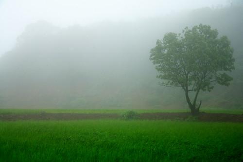 misty magic...