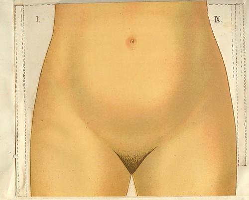 anatomie  2 femme pl 1