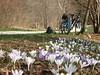 le bici tra i fiori