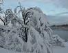 Несбытошные мечтания при +33С - 4 (shirley_turner) Tags: winter white snow cold ice зима снег мороз сосульки сугробы морозисолнце