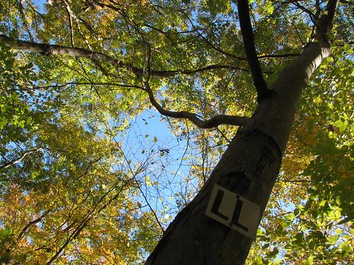 LL tree 2
