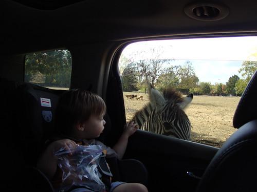 Harmony Park Safari, Huntsville AL