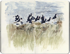 Oyster Catchers (Wil Freeborn) Tags: moleskine sketch journal watercolour oyster catchers