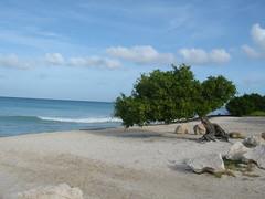 Aruba Tree at the beach (kslavik) Tags: tree water landscape aruba mywinners excellentphotographerawards