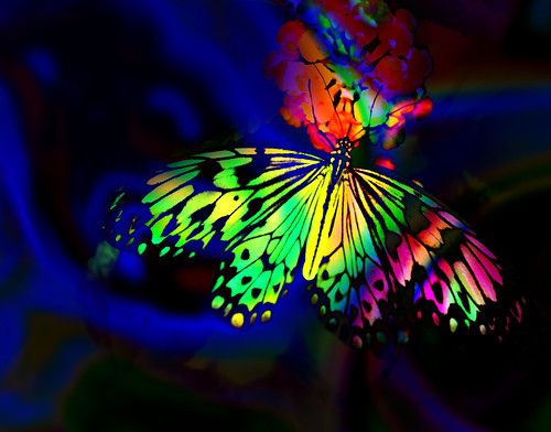 Rainbow Butterflies Backgrounds