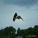 Matt Price Glide