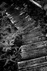 (kylewein) Tags: road old white fish black fern colour tree art texture net church nature water metal wall vancouver stairs barn fence river kyle word mexico island interesting place humanity walk think ad steps smoking line growth trail human valley shade rush porch attractive unknown daisy letter northisland form christianity wilderness flour opium loreto wein naturewalk comox