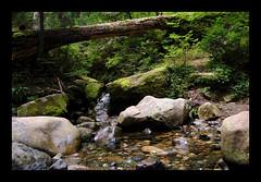 (sidz11) Tags: water forest stream calm tranquil impressedbeauty diamondclassphotographer