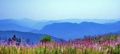 Where Orpheus was born (Emilofero) Tags: blue mountain green grass europe view bulgaria balkans naturesfinest rodopi abigfave