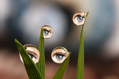 Ever get the feeling you are being watched ? Dewdrop refraction (Lord V) Tags: macro eye water dewdrop refraction tpc eow abigfave tpcu14 tpcu14l4