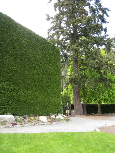 Huge arborvitae hedge at Butchart Gardens in Victoria, BC